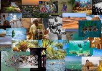 نمایشگاه مجازی عکس «خلیج همیشه فارس»