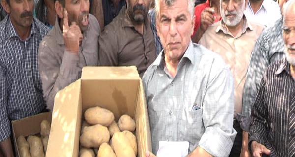اعتراض سیب زمینی کاران گلستانی به قیمت پائين خرید توافقی سیب زمینی