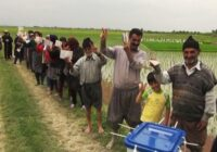 شالیکاران گلستان در اراضی کشاورزی به نامزدهای انتخابات ۱۴۰۰ رای دادند