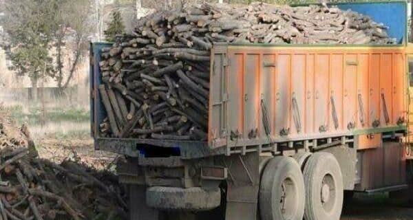 اقدام قاچاقچیان چوب به ضرب و جرح نیروهای منابع طبیعی گرگان