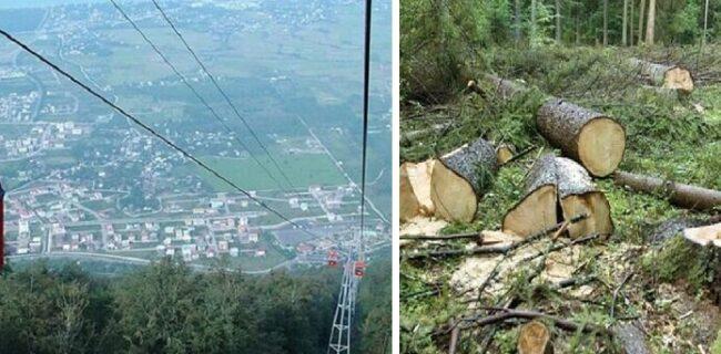 کارزار دوستداران محیط زیست با درخواست توقف ساخت تلهکابین در جنگل ناهارخوران