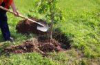 درختکاری یک محکوم به جای زندان