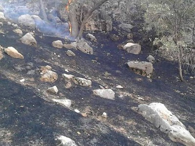 مهار کامل حریق در عرصههای جنگلی گالیکش با ۷ مصدوم و ۱۲ هکتار خسارت