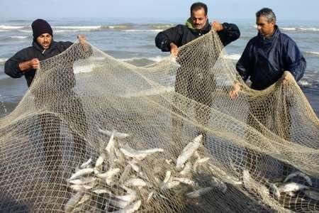 هشدار درباره مصرف ماهیان خزر به دلیل آلوده بودن به فاضلاب و زباله