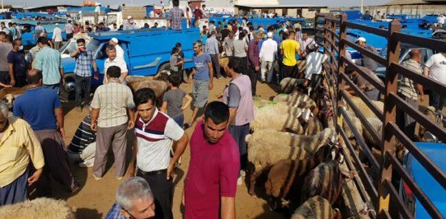 نظارت ۵۶ اکیپ دامپزشکی گلستان در روز عید قربان بر ذبح دامها