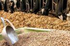 یکی از عوامل افزایش قیمت نهادههای دامی دپو در گمرک جنوب است