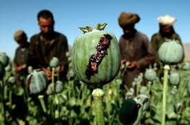 مصرف ماده مخدر تریاک عوارض بسیار خطرناکی در پی دارد